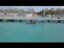 Дельфинарий Куба 2