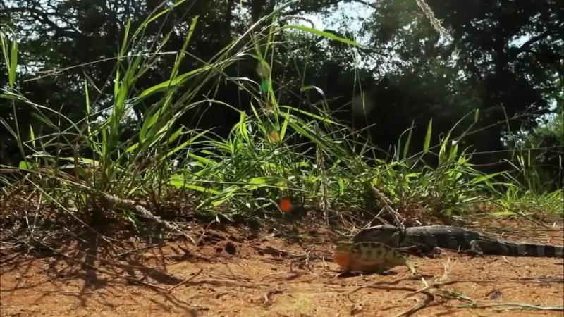 Скорость жизни Красота и жестокость природы Молниеносные атаки хищников