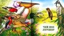 ЧЕЙ НОС ЛУЧШЕ Виталий Бианки аудио сказка Аудиосказки Сказки на ночь Слушать сказки онлайн