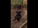 Видео черненького щенка мальчик