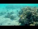 анонс Красивейший Подводный мир Макади, Красное море, Египет.
