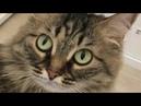 ЕДЕМ на КАСТИНГ ШИКАРНАЯ жизнь кошки Мили Ванили