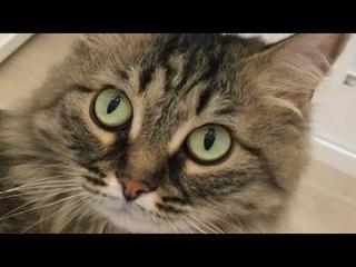 ЕДЕМ на КАСТИНГ !!! ШИКАРНАЯ жизнь кошки Мили Ванили !!!