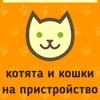 Усатые-полосатые ищут дом! Кошки и котята