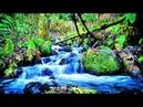 Шум ручья в лесу, пение птиц. Расслабляющие звуки воды - 10 часов для глубокого сна