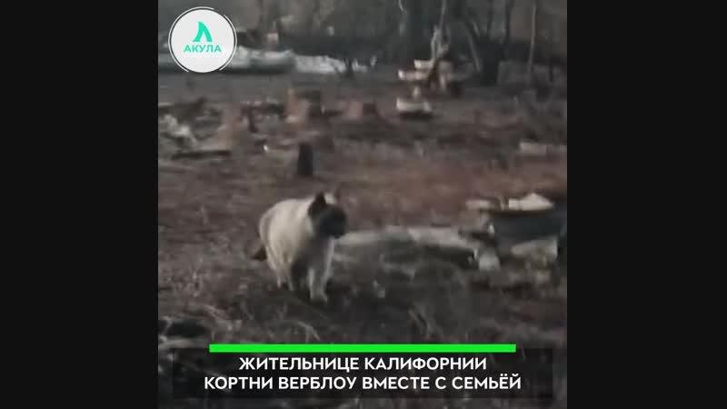 Кошка, которая выжила | АКУЛА