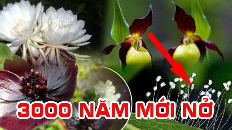 Top 10 Loài Hoa Quý Hiếm Nhất Thế Giới | Hoa Ưu Đàm 3000 Năm Mới Nở 1 Lần
