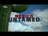 Непокорная Мексика  2. Быстрый и мертвый / 2018