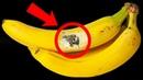 Если Видите Банан с Такой Отметиной Немедленно Выбросьте Его