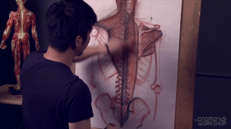 The Gnomon Workshop Anatomy Workshop (Volume 5) 7. Muscles of the Human Back – Part 1