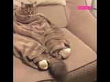 Кот и одеяло