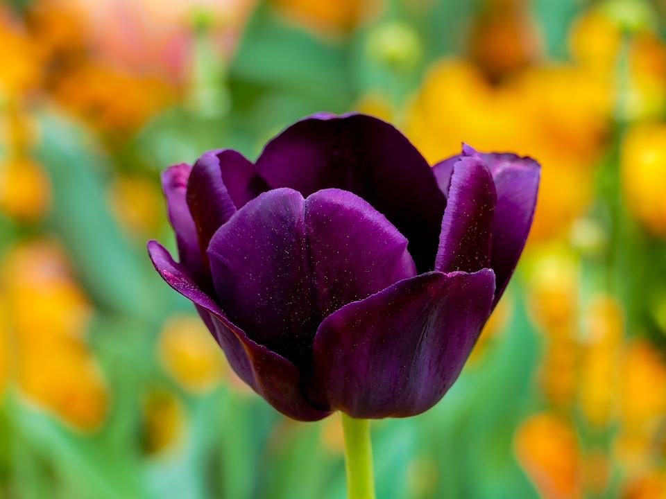 Фестиваль по цветочному оформлению стартовал в Лианозове