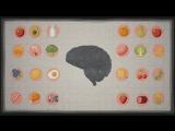 Как еда влияет на наш мозг [Ted Ed на русском]