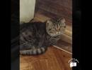 Видео про милого котика