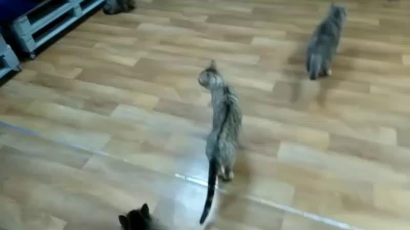 Котики подарят много любви и спокойствия после тяжелого трудового дня ❤️