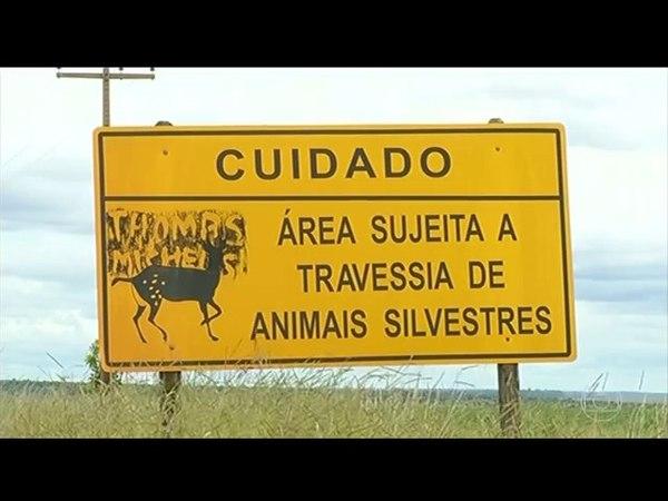 Quase 500 mil animais silvestres são atropelados por ano no Brasil. AcheiC