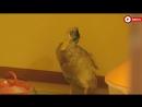 Утка, выжившая после «Чупакабры»