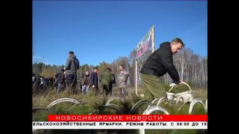 120 тысяч деревьев посадят новосибирцы до конца октября