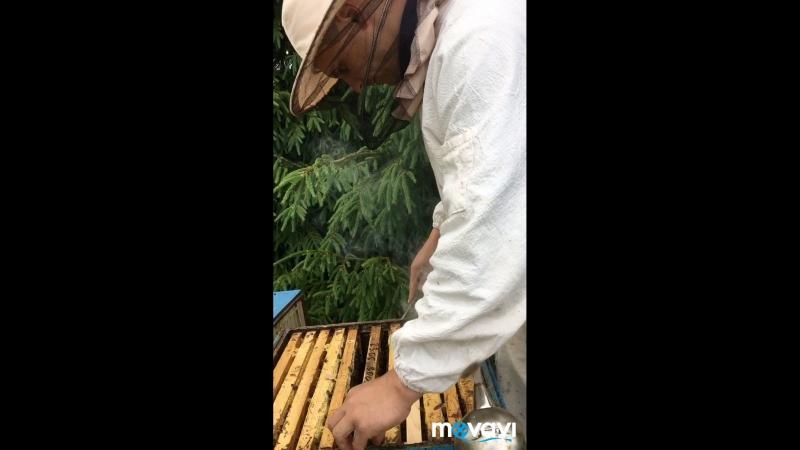 ✅Проверяем улей - не вошла ли пчелиная семья в роевое состояние☝️☝️☝️