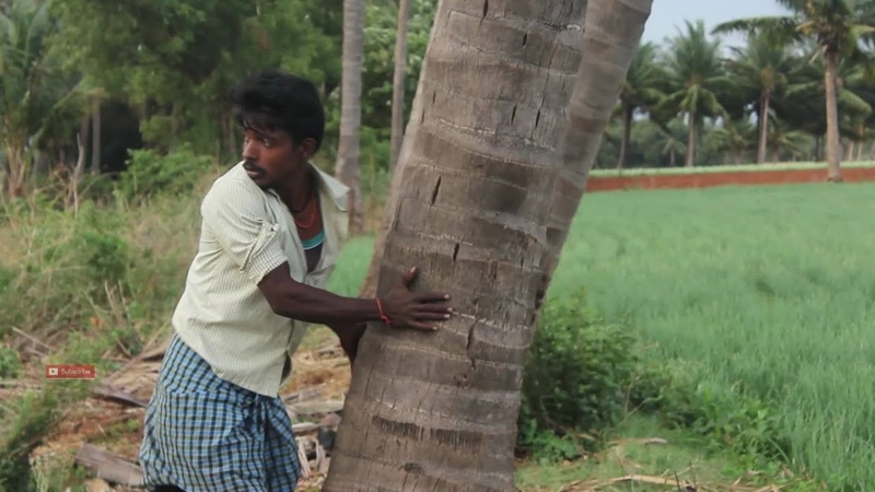 My friend theft Tender coconut in my village (Amazing taste) / VILLAGE FOOD FACTORY