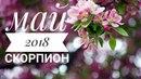 Скорпион: Гороскоп на Май 2018. Любовный гороскоп.Финансовый гороскоп