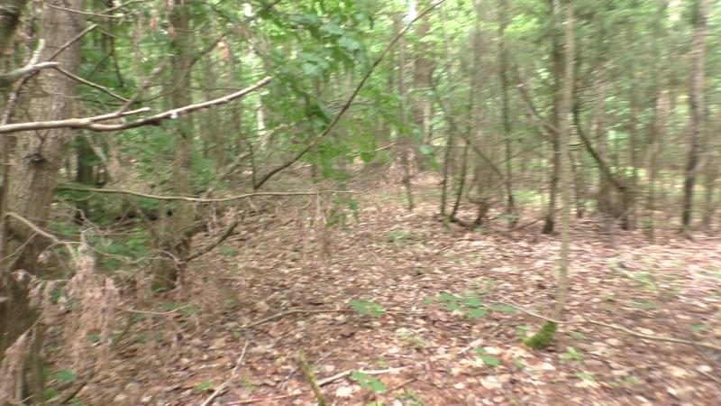 Лес 14 Голешонки Траншея