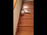 Очень ленивый кот