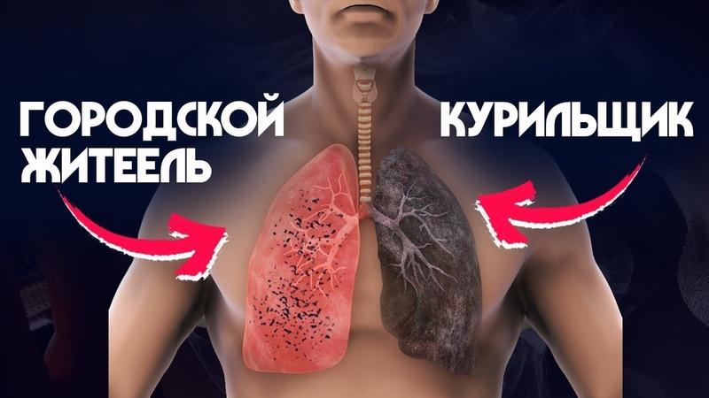 Легкие курильщика VS Легкие городского жителя. РАК ЛЕГКИХ? Загрязнение окружающей среды