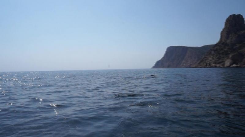 Выход из Балаклавской бухты. Дельфины.