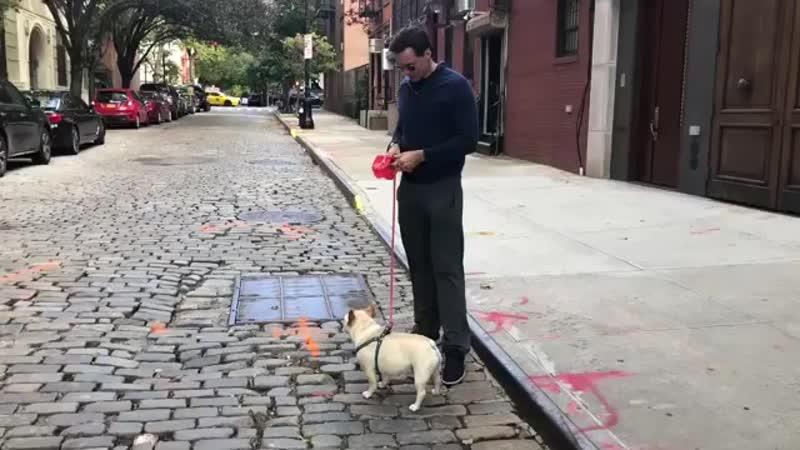 Пёс Хью Джекмана наложил на фото Райана Рейнольдса