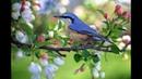Пение птиц в лесу. Прогулка по солнечному лесу