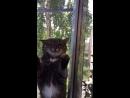 Мой кот Вася 🤗