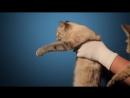 Авто Ваз ответ Мерседесу на рекламу про куриц