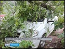 Упавшее дерево повредило несколько автомобилей в Рыбинске