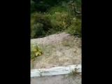 Zhadyra Marat - Live