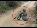 정체불명의 괴생명체라 의심받는 영상!