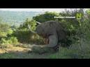 Неукрощённый Шамвари - смотри на Viasat Nature