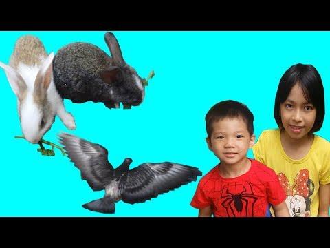 ABC bé Bi cùng chị chăm sóc các bạn thú nuôi | pet