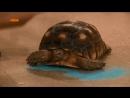 Держите сахар подальше от черепах!