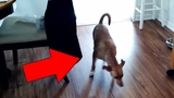 Cats and Dogs That Saw Something Their Owners Couldn't See ESP and the Supernatural