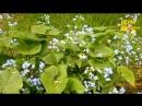 03. Бабочка в цветах летает