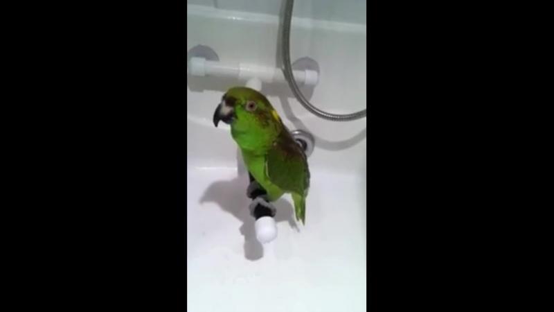 поющий попугай нашего учителя