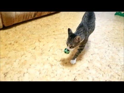 Даже коты играют в футбол.Кот Оскар и кошка Маруся играют в футбол. 2 матч