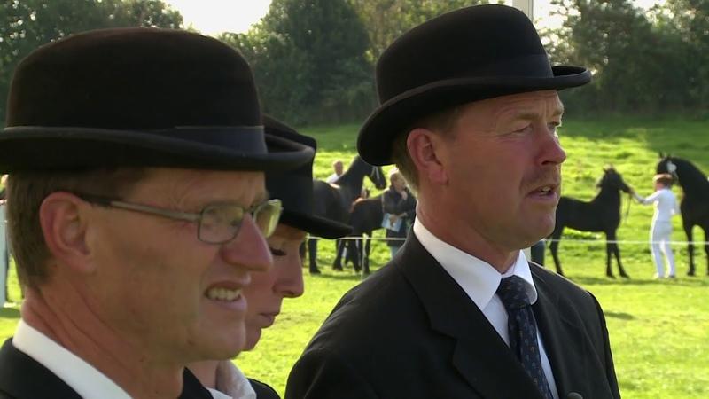 The Black Miracle, de geschiedenis van het Friese paard
