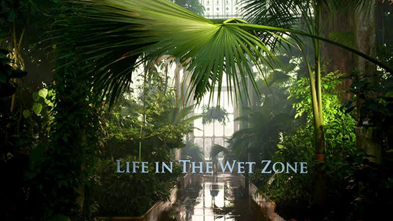 В королевстве растений Эпизод 1 Жизнь во влажном климате
