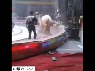 Вы еще ходите в цирк Всем любителям цирка посвящается!
