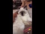 Кот и Мо Салах!