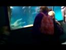 русалка в москвариуме