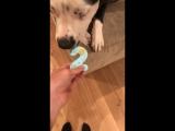 Нэш с печеньем