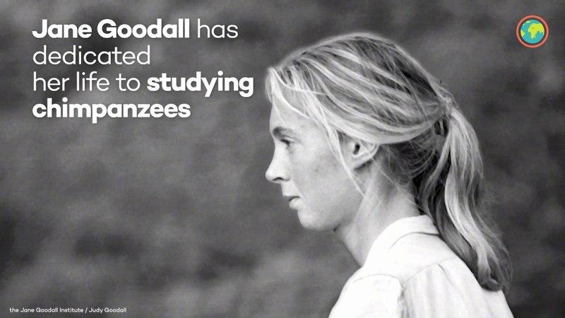 Ecosia supports Jane Goodall's work in Uganda смотреть онлайн без регистрации